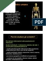 01_scheletro