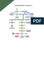 Principais esquemas de Bioquímica II