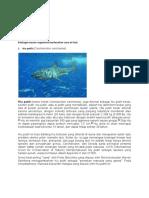 Berbagai macam organisme berdasarkan zona air laut.docx