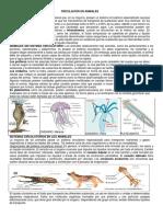 Circulacion-en-Animales.docx