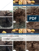 Program Complex Fertilizari Radiculare Si Foliare Primii Ani