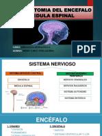 Anatomia Del Encefalo y Medula Espinal