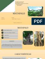 MATAPALO DIAPOSITIVAS