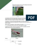 filogenia biologia.docx