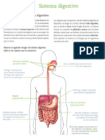 Guia Sistema Digestivo 8º