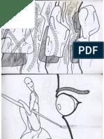 normalia.pdf