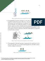 Introducción_a_la_cromatografía_líquida_de_alta_re..._----_(Pg_16--46).pdf