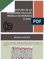 estructuradelamembranacelular-120921202431-phpapp02.pdf