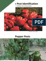 Pepper Pest Identification 2
