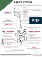 DG Digestive System
