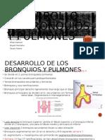 Desarrollo de bronquios y pulmones.pptx