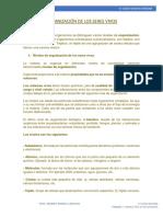 ORGANIZACIÓN DE LOS SERES VIVOS.docx