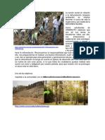 La acción social en relación a la deforestación (1).docx