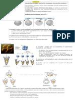 Embriologia tp
