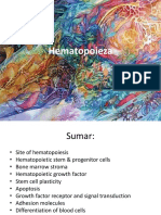 hematopoiesis-differentiation-and-maturation-of-blood-cells.ppt