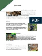 12 Especies en Peligro de Extinción en Guatemala