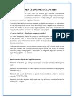 ANATOMIA DE LOS PARES CRANEALES.docx