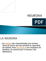 Neuroa y Snc2019-1