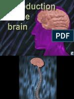 neurobiologydrugaddict.ppt