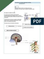 Instructivo Sistema nervioso central.docx