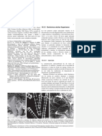 10-Fossils-in-Thin-Section-copia-2.en.es.docx