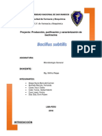 MB proyecto B.subtilis.docx