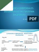 Desarrollo Del Sistema Digestivo (1)