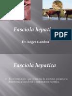 parasitologia Fasciola Hepatica