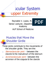 Muscular System of Upper Extemity