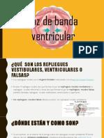 Voz de Banda Ventricular,Vestibular,Superior,Falsa