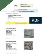 ascaris lumbricoides.docx