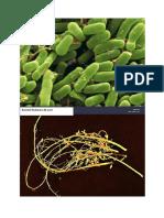 bacterii.docx