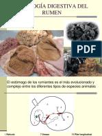 Fisiologia Digestiva Del Rumen 2009