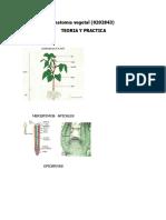 AV. TEORIA Y PRACTICA.docx