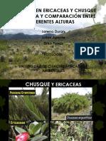 HERBIVORÍA EN ERICACEAS Y CHUSQUE _ INCIDENCIA Y (3).pptx
