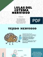 CELULAS DEL SISTEMA NERVIOSO.pptx