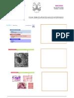 APUNTES NUCLEO INTERFÁSICO pdf