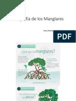 Infografía de los Manglares [Autoguardado].pptx