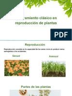 Mejoramiento clásico en reproducción de plantas