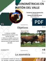Medidas Bovinometricas Harton Del Valle