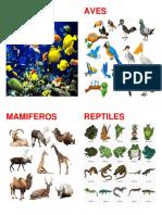 Clasificacion Animales Vertebrados