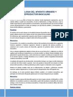 EMBRIOLOGIA - ANATOMIA- FISIOLOGIA DEL APARATO GENITOURINARIO.docx