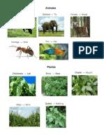 animales, plantas, frutas y verduras en poqomam.docx