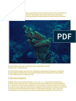 Porifera Berasal Dari Nama Latin