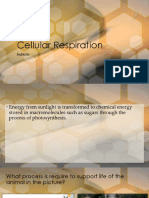 4 Cell Respiration