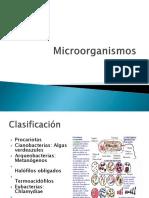 ckasificación microorganismos