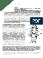 resumen_OrganizacionSN_.docx