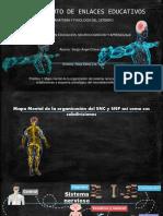 Práctica 1 PDF