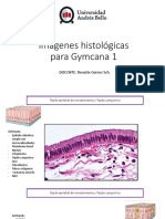 Laboratorios histologia para gymcana 1.pdf