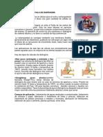 VÁLVULA DE DIAFRAGMA con ficha resumda.docx
